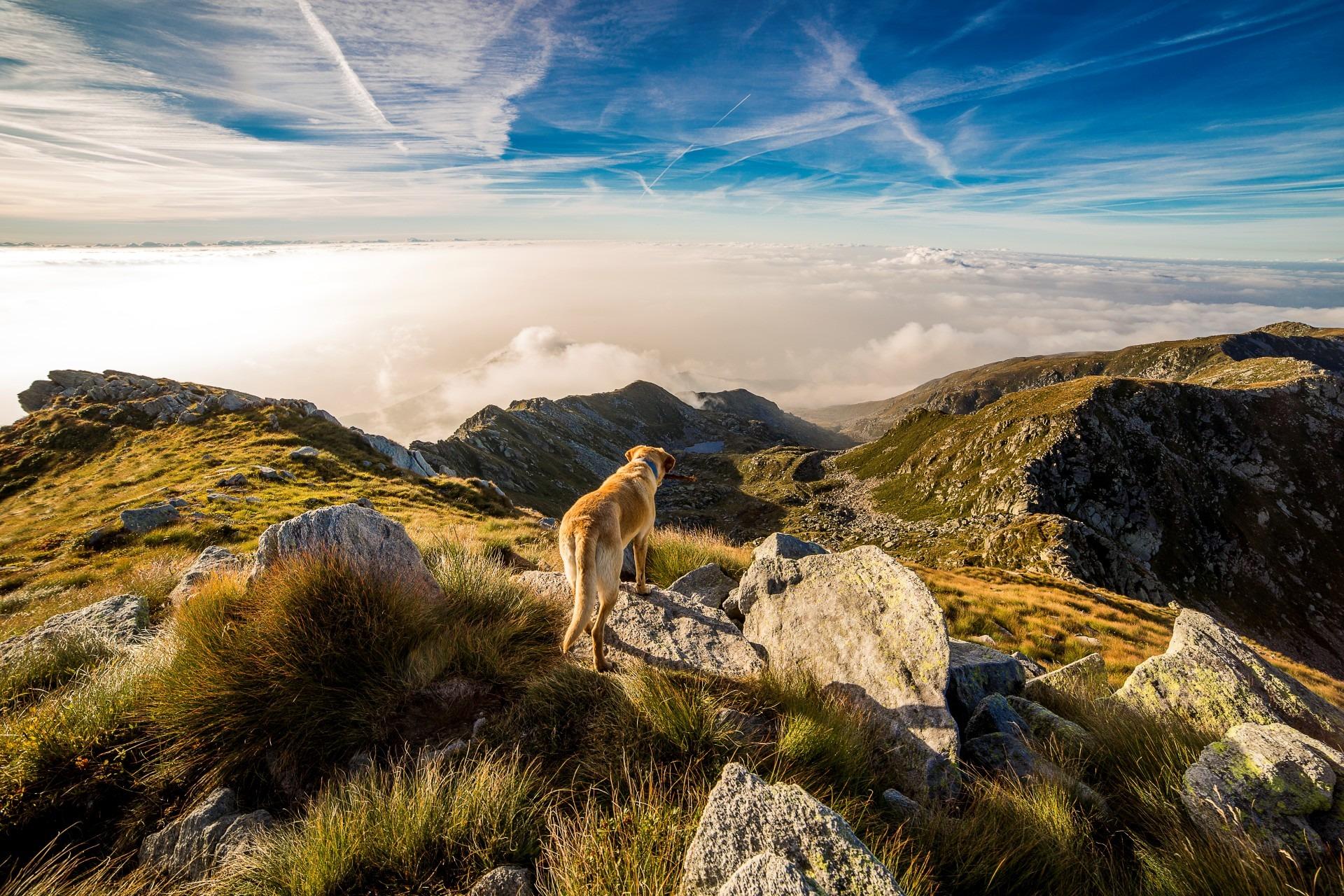 dog-mountain-mombarone-clouds-65867
