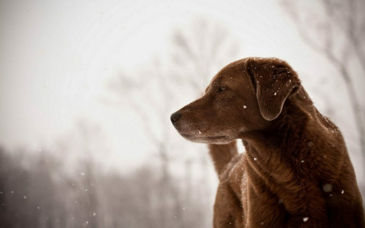 dog-friend-look-winter-snowflakes-1